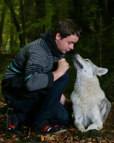 shooting photo chien loup 04